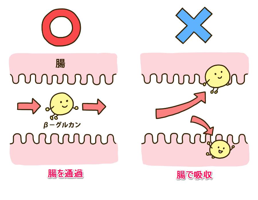 β-グルカンは腸を通過します
