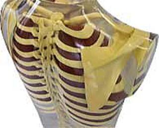肩甲骨の位置2