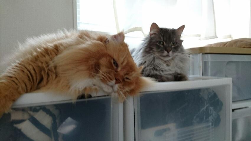 我が家の猫・ろく・むぎ
