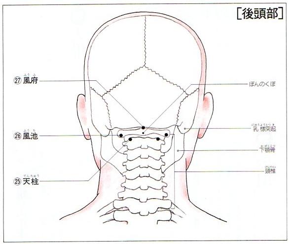 首のツボ2-風池・天柱・風府