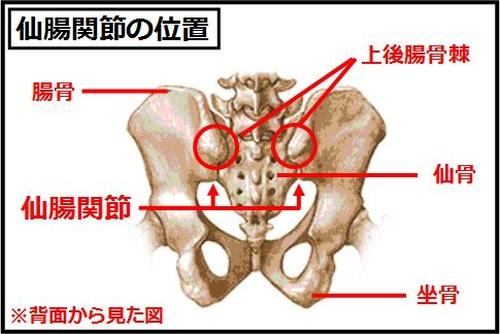 仙腸関節1