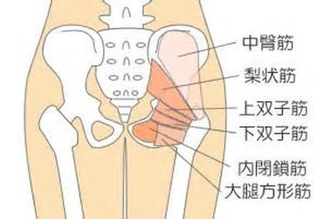 中殿筋梨状筋上双子筋下双子筋内閉鎖筋大腿方形筋
