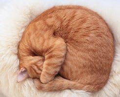 寒さで丸まる猫背