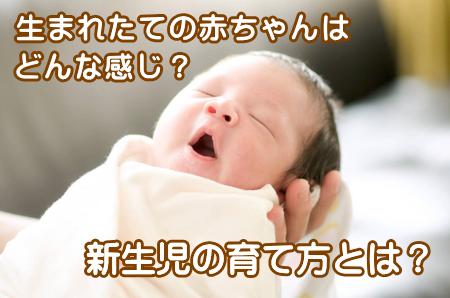 新生児の育て方
