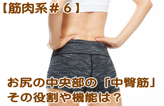 お尻の筋肉の詳細|臀筋群「中殿筋」の機能やストレッチ、強化を徹底解説