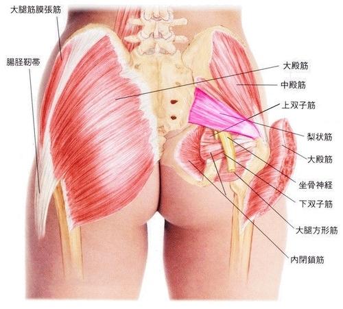 お尻の筋肉の詳細