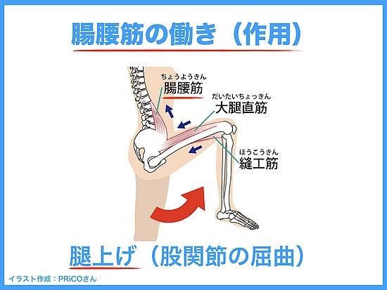 腸腰筋の機能