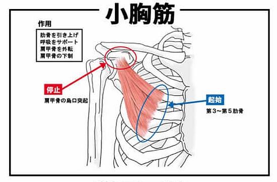 小胸筋の位置