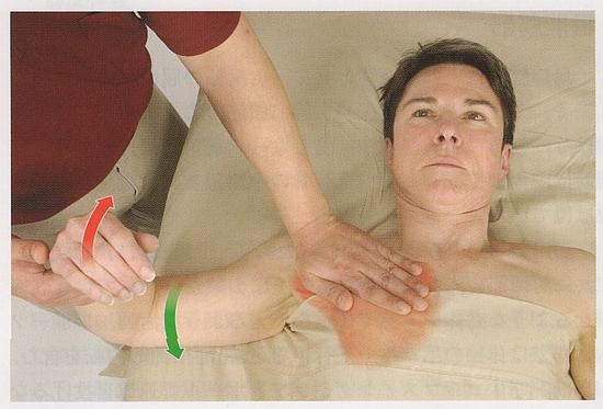 大胸筋の触診1