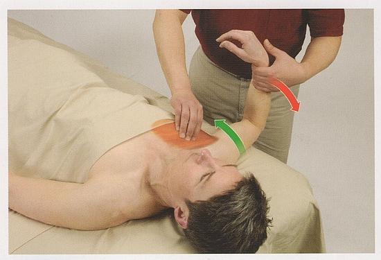 大胸筋の触診2