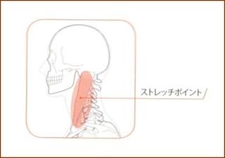 胸鎖乳突筋のストレッチ4