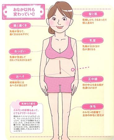 妊娠中はお腹以外にも変わっていく