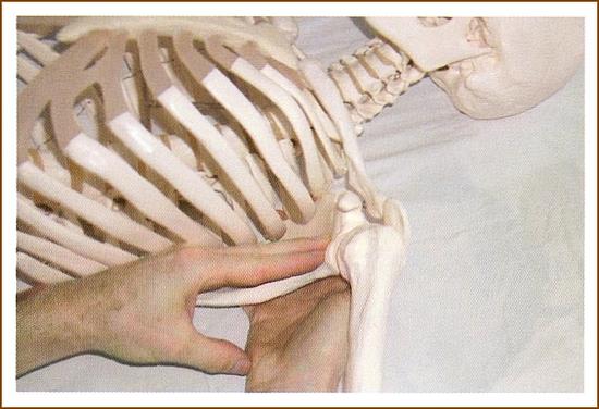 肩甲下筋のマッサージ6