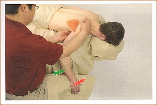 肩甲下筋の触診方法