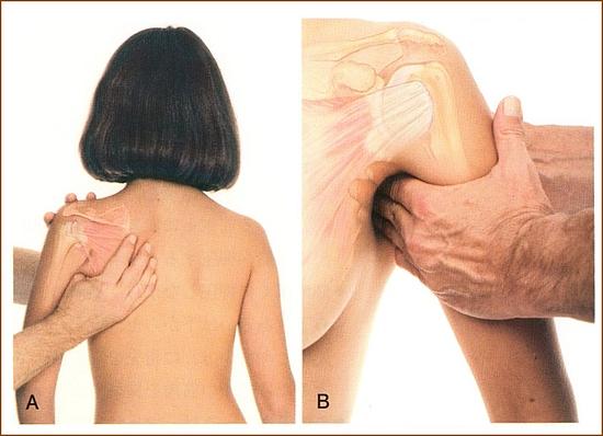 肩甲下筋のマッサージ2