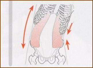 腹斜筋のストレッチのイメージ