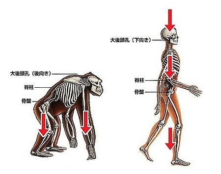 腰痛1-2