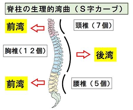 背骨のバランス