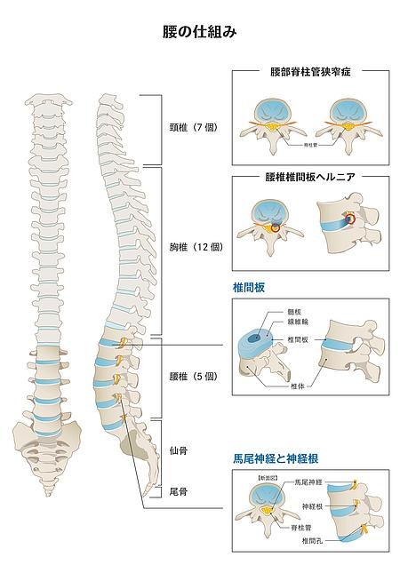 坐骨神経・馬尾神経