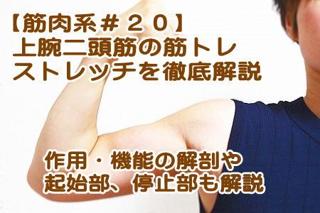 上腕の筋肉|【上腕二頭筋】「筋トレ7選」と「ストレッチ3選」作用・機能も紹介