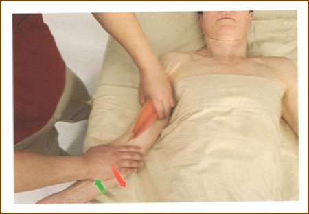 上腕二頭筋の触診方法