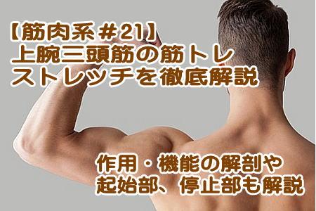 上腕三頭筋を鍛える筋トレ、ストレッチ、作用や機能、起始・停止を紹介