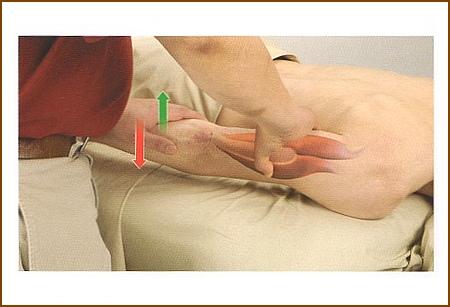 上腕三頭筋の触診方法