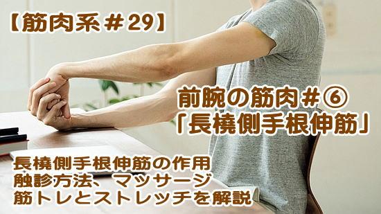 長橈側手根伸筋-作用、起始・停止、鍛え方の筋トレ・ストレッチ、触診やほぐし方