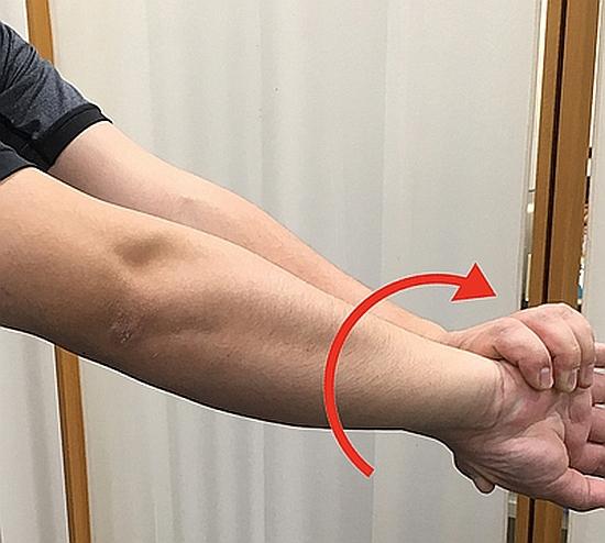 方形回内筋はどんな役割の筋肉