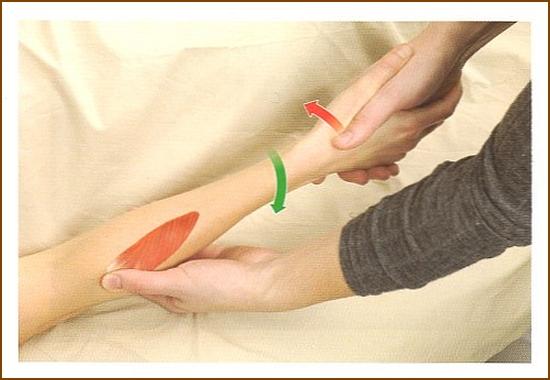 回外筋の触診方法