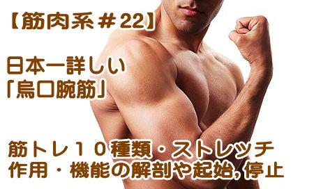 烏口腕筋の機能解剖や作用、起始停止、筋トレ(10種類)ストレッチ