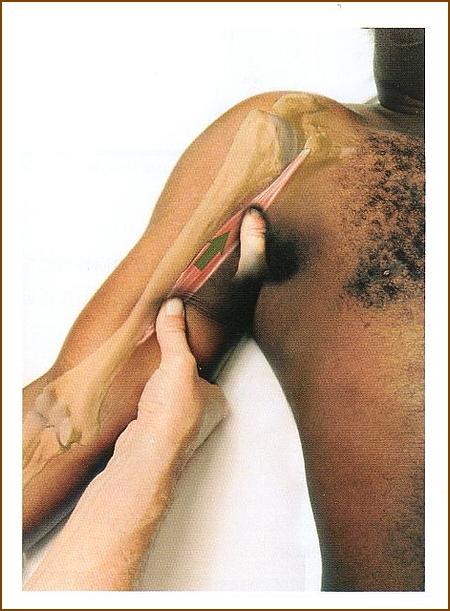 烏口腕筋の整体、マッサージやほぐし方