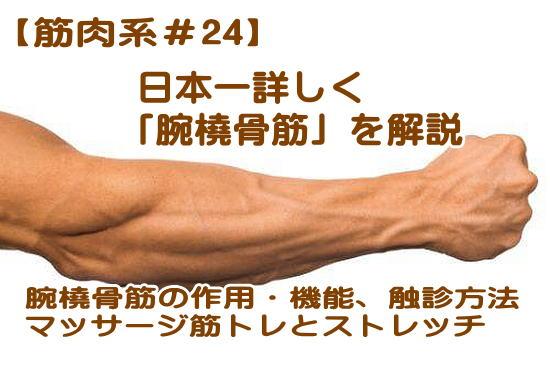 腕橈骨筋について徹底解説、機能や作用,起始停止,触診やマッサージやほぐし方、筋トレやストレッチ