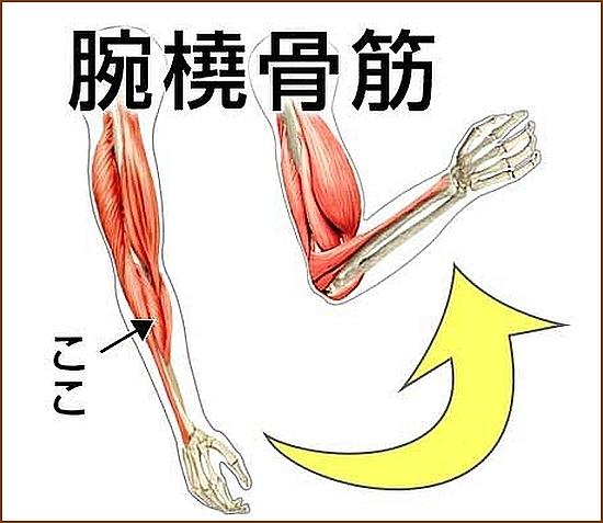 腕橈骨筋ってどんな筋肉