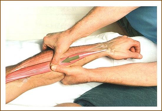 腕橈骨筋のマッサージやほぐし方