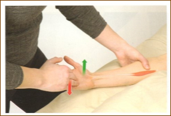 長掌筋の触診方法