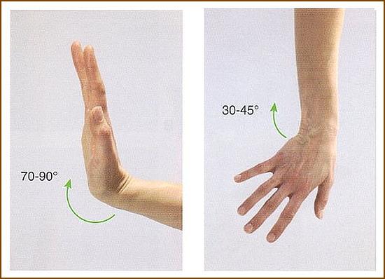 尺側手根伸筋の作用