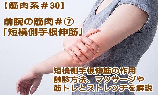 短橈側手根伸筋】作用、起始・停止、鍛え方の筋トレ・ストレッチ、触診やほぐし方