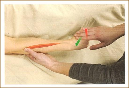 短橈側手根伸筋の触診方法
