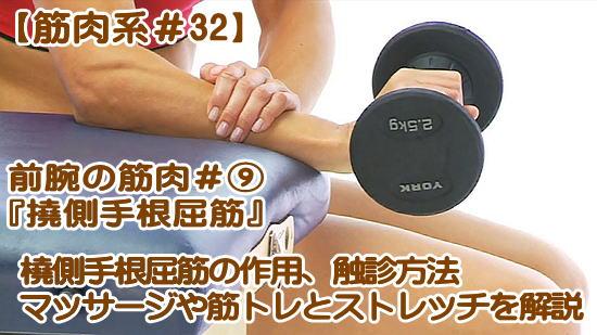 【橈側手根屈筋】鍛える筋トレ・ストレッチ|触診やマッサージ、役割,機能,起始・停止