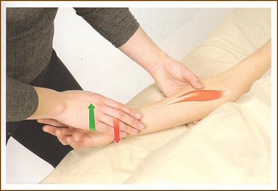 橈側手根屈筋の触診方法