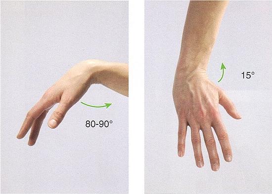 橈側手根屈筋の作用