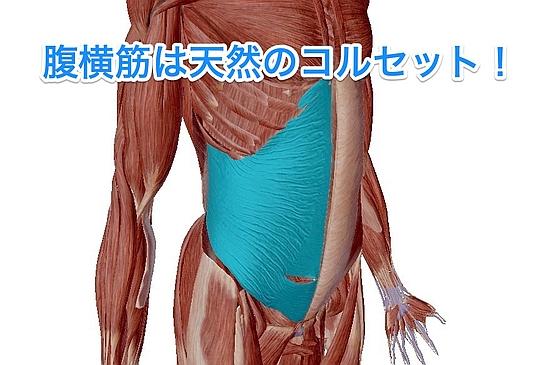 腹横筋の機能