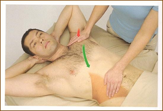 内腹斜筋の触診方法